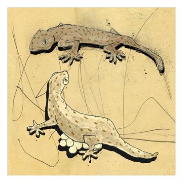 Gecko13marge